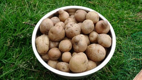 Cómo reducir el gasto por compra de patatas